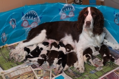 Darcy and her puppies - 1 week old